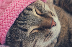 Sleeping cat in a pink hat Royalty Free Stock Photos