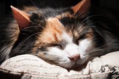 Sleeping cat posture Stock Photos