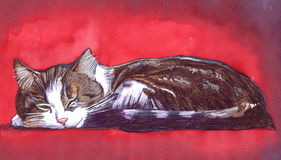 Sleeping cat on red background. Watercolor illustration of a sleeping cat. Red background Royalty Free Stock Photos