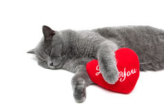 Sleeping cat and red pillow on a white background Stock Photo