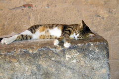 Sleeping cat on a rock Royalty Free Stock Photo
