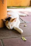 Sleeping cat. In shade of tree Royalty Free Stock Images