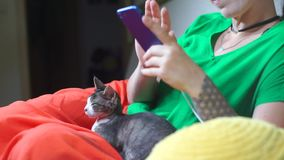 Sleeping cat sitting on girl's lap, girl uses smartphone stock video footage