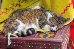 Sleeping cat. Cat sleeps on an old colorful table Royalty Free Stock Image