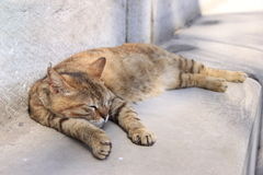 Sleeping cat. A cat sleeps on the steps of the Hagia Sophia in Istanbul.  The city is known for its large population of stray cats Royalty Free Stock Photos
