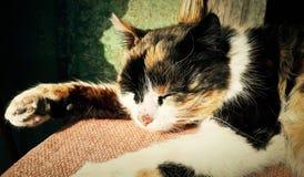 Sleeping cat Stock Photo
