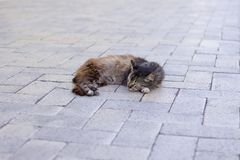 Sleeping cat in the square. Brown young cat. stock photos