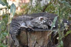 Sleeping cat on the stump stock image