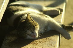 Sleeping cat. In summer time Stock Photo