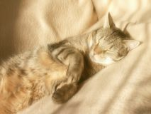 Sleeping cat with sunset light Royalty Free Stock Photos