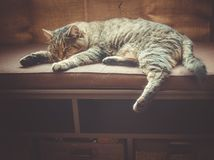 Sleeping cat. Cat sleeping sweetly on a bench Royalty Free Stock Image