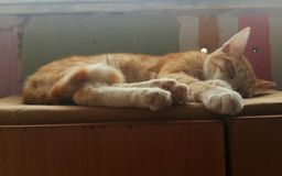 Sleeping cat. Tired sleepy sleep desk home mammal pet cute adorable nice lovely awesome dreaming Royalty Free Stock Images