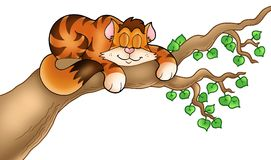 Sleeping cat on tree branch Royalty Free Stock Photography