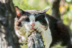 Sleeping cat on a tree Royalty Free Stock Image