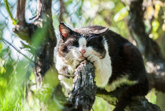Sleeping cat on a tree Stock Photos