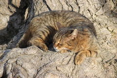 Sleeping cat under a tree Stock Images