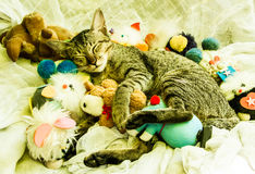 Sleeping cat. The cat sleeping with various toys around royalty free stock image