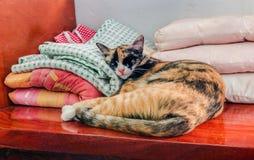 The Sleeping Cat Royalty Free Stock Image