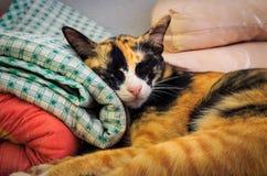 The Sleeping Cat Royalty Free Stock Photo