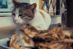 cat watch deep Fried Fish Head stock image