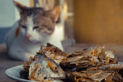 Sleeping cat watch deep Fried Fish Head. Selective focus on the. Sleeping cat watch deep Fried Fish Head. Selective on the fish head stock photography