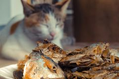 Sleeping cat watch deep Fried Fish Head. Selective focus on the. Sleeping cat watch deep Fried Fish Head. Selective on the fish head stock image
