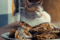 Sleeping cat watch deep Fried Fish Head. Selective focus on the. Sleeping cat watch deep Fried Fish Head. Selective on the fish head royalty free stock image