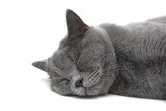 Sleeping cat on a white background close-up Royalty Free Stock Photos