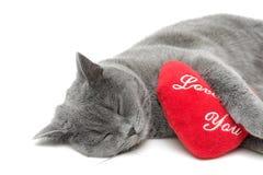 Sleeping cat on a white background closeup Stock Photo