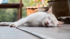 Sleeping cat. White cat sleeping on the ground Royalty Free Stock Image