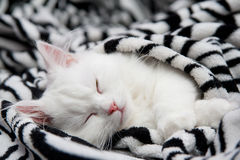 The sleeping cat Royalty Free Stock Image