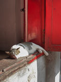Sleeping cat. Cat sleeping window ledge in the sun Royalty Free Stock Image