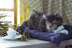 Sleeping cat on winter window background concept composition Royalty Free Stock Photo