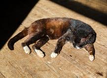 Sleeping cat on wood floor Royalty Free Stock Photo