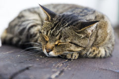Sleeping cat on a wooden bench Royalty Free Stock Image