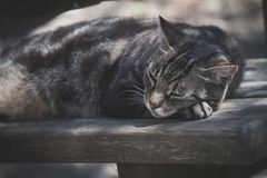Sleeping cat on wooden bench portrait Royalty Free Stock Photos