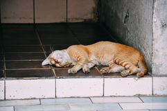 A sleeping cat in Yangon. Stock Image