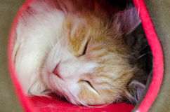Sleeping cat. Young cat sleeping in a tunnel Stock Images