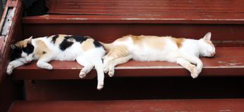 Sleeping cats Royalty Free Stock Photography