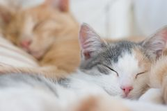 Sleeping Cats Royalty Free Stock Photos