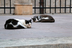 Sleeping Cats Stock Images