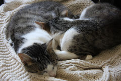 Sleeping cats Stock Photo