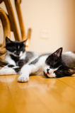 Sleeping cats Stock Photos