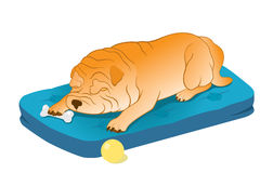 Sleeping Chinese Shar-Pei Stock Photography