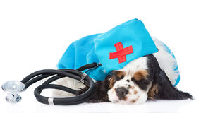 Sleeping Cocker Spaniel puppy wearing hat doctor with stethoscope Stock Images
