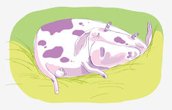 Sleeping cow Royalty Free Stock Images