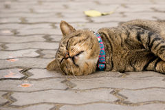 Sleeping cute cat. On the floor Royalty Free Stock Photography