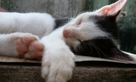 Sleeping Cute Cat Royalty Free Stock Image