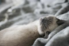 Sleeping cute cat. What you dreaming about, cutie stock photo