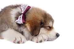 Sleeping cutie Stock Photography